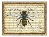Bumblebee Harmony I