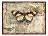Poetic Butterfly I