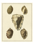 Crackled Antique Shells IV
