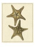 Crackled Antique Shells VIII Reproduction d'art par Denis Diderot