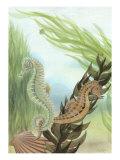 Seahorse Serenade IV Reproduction d'art par Charles Swinford