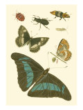 Papillion V