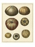 Crackled Antique Shells III Reproduction d'art par Denis Diderot