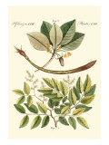 Native Plants I