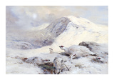 Winter Ptarmigan in a Mountain Landscape