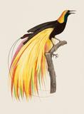 Le Grand Oiseau De Paradis Emeraude