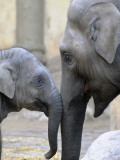 Four Month Old Elephant and Her Mother are Pictured in Hagenbeck's Zoo in Hamburg  Northern Germany