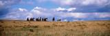 Horses on a Landscape  East Glacier Park  Glacier County  Montana  USA