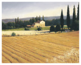 Golden Fields and Cypress