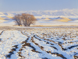 Plowed Field and Willows in Winter  Bear River Range  Cache Valley  Great Basin  Utah  USA