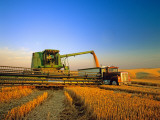 Farmer Unloading Wheat from Combine Near Colfax  Washington  USA