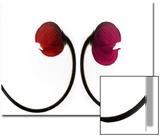 Two Poppies  Digital Art