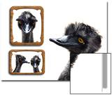 Emu Memories