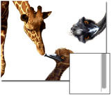 Giraffe  Emu and Offspring