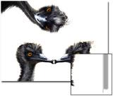 Kissing Emus