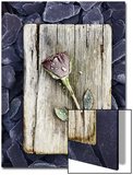 Frosted Rose on Weathered Piece of Timber
