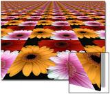 Gerbera Flowers Multiplied in Tiles