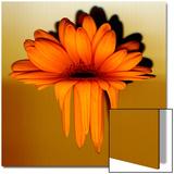 Gerbera Flower Melting  Digital Manipulation
