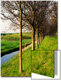 Dutch Dike with Trees and Green Grass  Holland