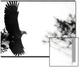 Bald Eagle in Flight by Treetop