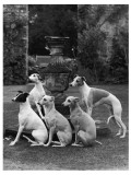 A Group of Seagift Whippets around a Fountain Owned by Whitwell