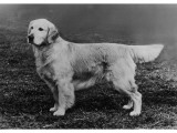 Champion Camrose Cabus Christopher Owned by Tudor