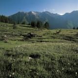Wild Flowers on a Landscape  Orsiera-Rocciavre Nature Park  Chisone Valley  Torino Province