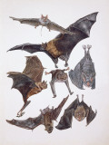 Various Animals of the Bat Family Papier Photo