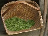 China  Fresh Tea Leaves in the Bamboo Basket