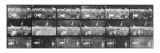 Album sur la décomposition du mouvement:Animal Locomotion/cygnes et flamands