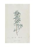 Description des plantes rares que l'on cultive à Navarre et à Malmaison