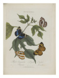 Album Donovan : an epitome of the natural history of insects in China