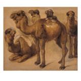Cinq chameaux