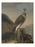 Faucon chaperonné