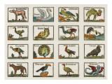 Planche d'animaux