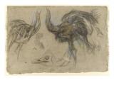Etude de deux autruches debout et d'une tête