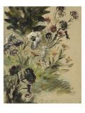 Etudes de fleurs : Soucis  hortensias et reines- marguerites; vers 1840-1850