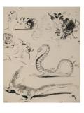 Sheet of Studies: Cat  Crocodile  Snake  Decorative