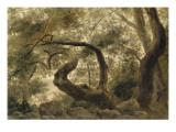 Sous-bois  arbres aux branches tortueuses