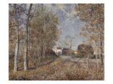 Un coin de bois aux Sablons  dit la route à l'orée du bois (lisière de forêt de Fontainebleau