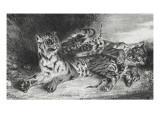 Jeune tigre jouant avec sa mère  lithographie 1er état