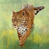 Kalina  le Jaguar