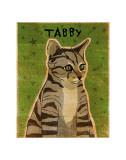 Tabby (grey)