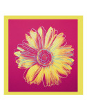 Daisy  c1982 (Fuschia and Yellow)