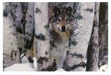 Gardien des montagnes Reproduction d'art par Art Wolfe