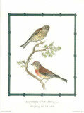 Ornitologica I