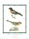 Ornitologica II