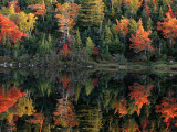 A Shore Lined with Trees in Autumn Hues Casting Reflections in Water