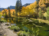 Aspen Trees Lining the Shallow Bed of a Mountain Stream
