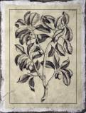 Embellished Antique Foliage I